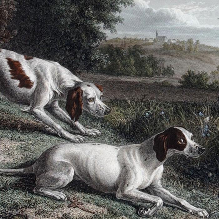Diane et Blonde, chiennes de LouisXIV, chassant le faisan - Une estampe d'après François Desportes